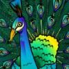 peacock - adventure palace