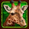 giraffe - african simba