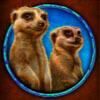 meerkats - african simba