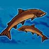 two fishes - alaska wild