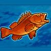 a fish - alaska wild