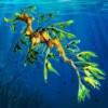 seaweed - ariana