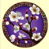 sakura - asian beauty