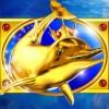 Золотой дельфин: дикий символ - atlantis world