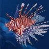 zebra fish - dolphin quest