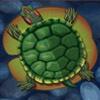 turtle - lucky koi