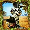 zebra - safari sam