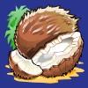 coconuts - skull duggery