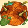 pumpkin - sweet harvest