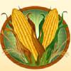 corn - sweet harvest